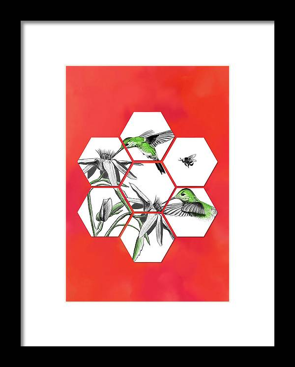 Honeycomb Hummingbird - Framed Print