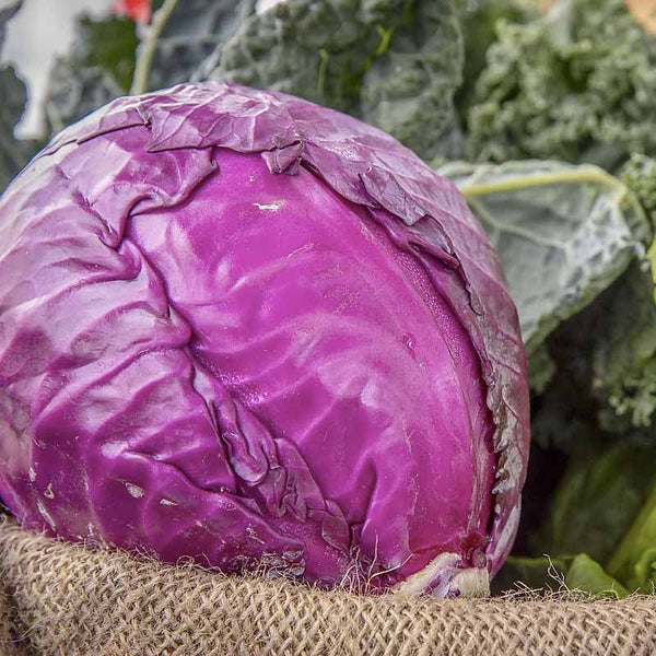Cabbage, Red Acre Seeds