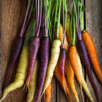 Carrot, Rainbow Mix Seeds