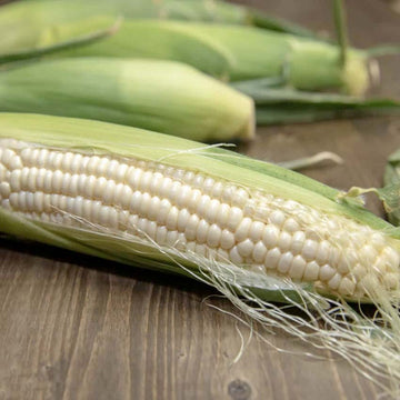 Corn, Sweet White Seeds