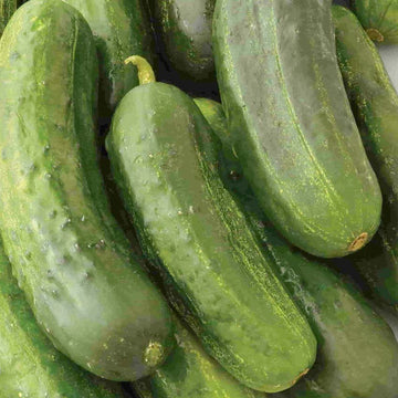 Cucumber, National Pickling Seeds