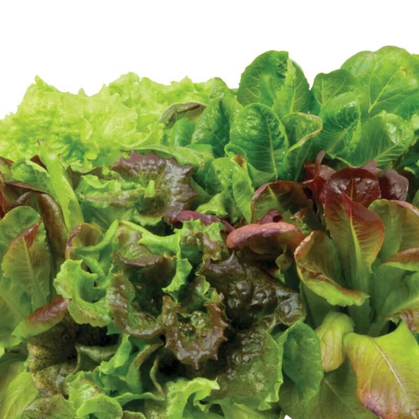 Thrive's All Lettuce Mix Seeds