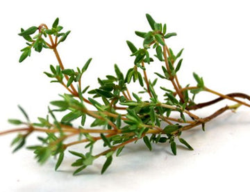 Micro Green Thyme, Common Seeds
