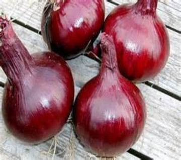 Onion, Southport Red Globe Seeds