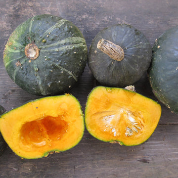 Squash, Burgess Buttercup Seeds