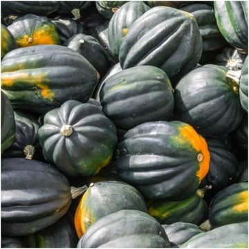 Squash, Table King Seeds
