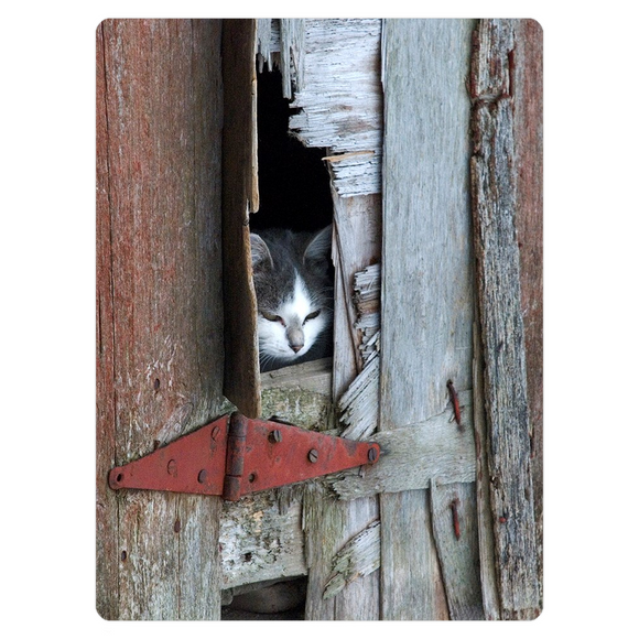 Barn Cat - Magnets