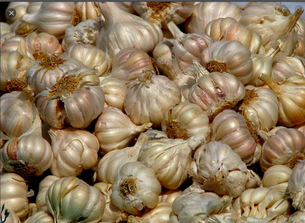 Indian Garlic / 100gms