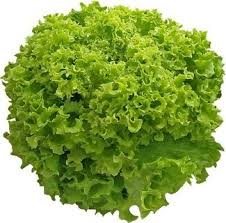 Lettuce Lollo Biando / piece