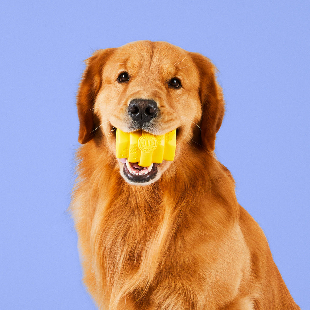 Hive Chew Toy for Large Dogs in mouth of dog