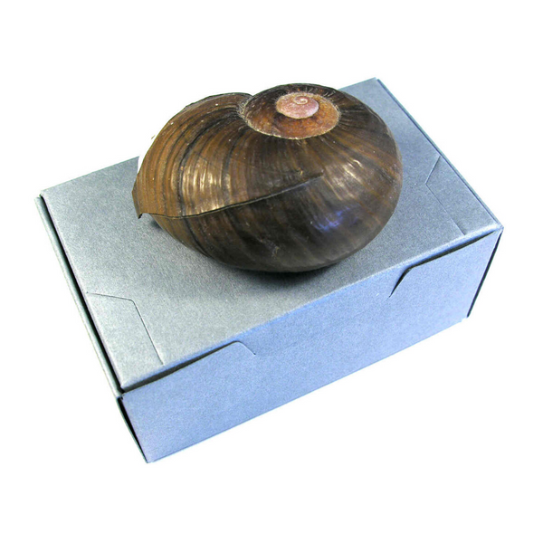 Artifact Box with Hinged Lid