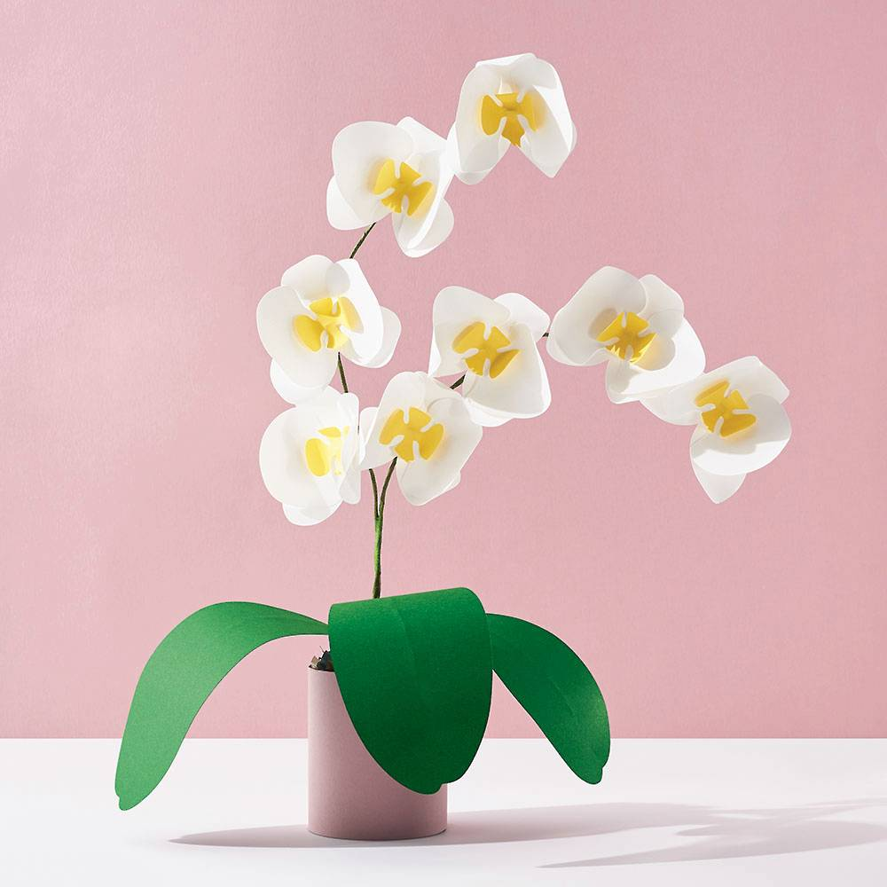 Potted Orchid Paper Kit by Paper Source