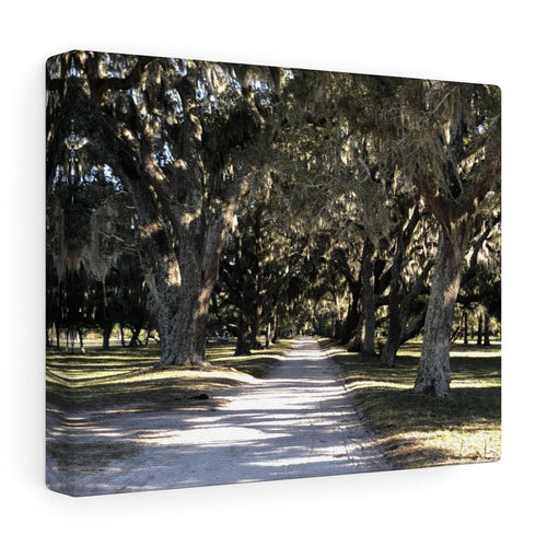 The Streets of Cumberland Island Canvas Print