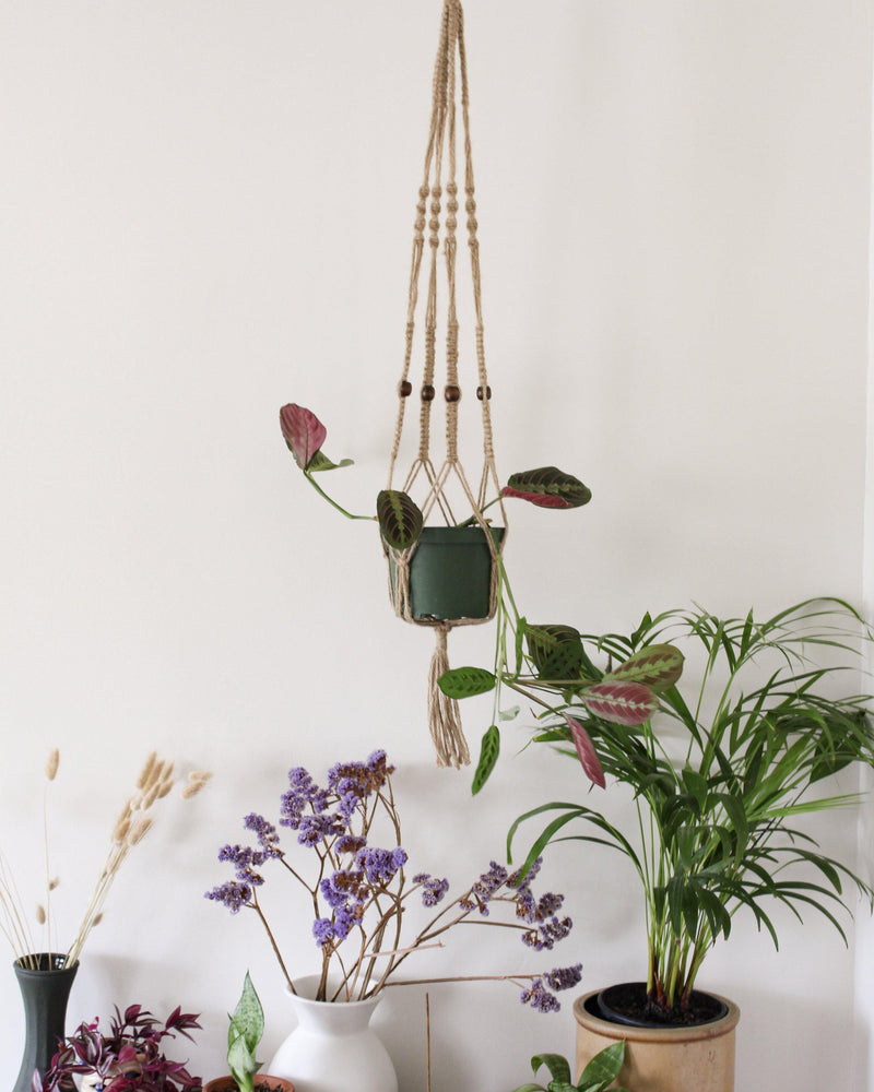 Callisia Natural Macrame Plant Hanger - Air Plant Holder - Plant Hanger Indoor - Macrame Plant Holder