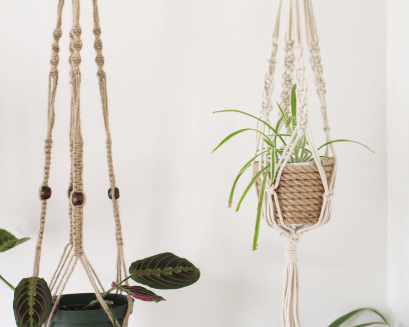 Alocasia Beige Macrame Plant Hanger - Air Plant Holder - Plant Hanger Indoor - Macrame Plant Holder