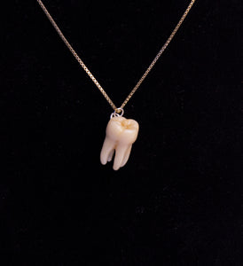 Molar Tooth Necklace - Sterling Silver Chain