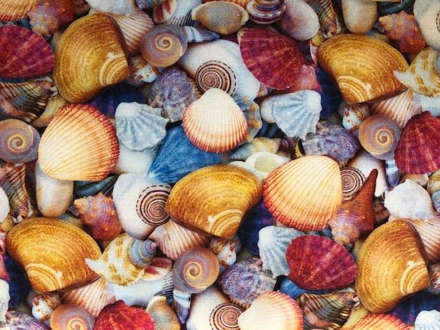 Quilting Cotton  - Sea Shells - 1/2 meter
