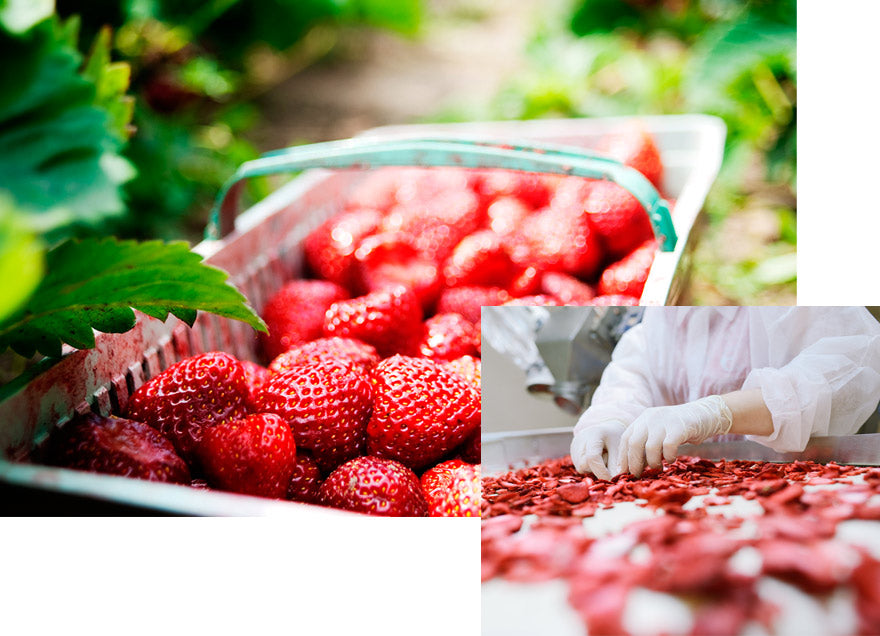 Strawberries and freeze-dried strawberries