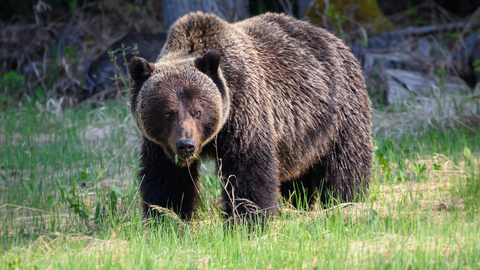 RadCast Outdoors Grizzly Episode
