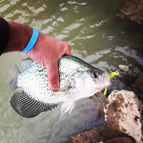 PK Spin a Jig Crappie