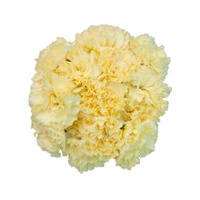 Load image into Gallery viewer, Assorted Carnations Case