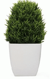 Small Plant Square White Pot