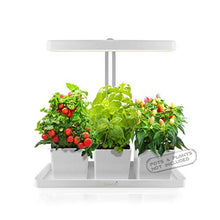 Load image into Gallery viewer, GrowLED LED Indoor Garden, Herb Garden, Kitchen Garden, Height Adjustable, Automatic Timer, 24V Low Safe Voltage, Ideal for Plant Grow Novice Or Enthusiasts, Various Plants, DIY Decoration, White