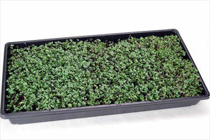 Hydroponic Microgreens Growing Kit - Grow Micro Greens & Baby Salad - Indoor Garden: All Supplies - Seeds, Trays, Etc.