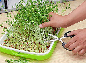 Pack of 4 Non-GMO Microgreens Seeds (Black Bean, Sunflower, Flat Bean, Wheatgrass) About 80 Grams Each. Enough for 8 Trays of Harvest