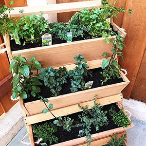 Cedar Vertical Patio Herb Garden Planter - Indoor Outdoor Growing Kit Succulent Planters Box Made of Cedar wood for Vegetables Starter Flower Boxes Pot Stand for Your Growing Balcony or Kitchen