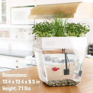 Back to the Roots Water Garden Betta Fish Aquaponic Ecosystem Science Kit for Kids with STEM Curriculum