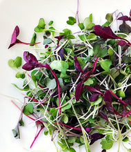 Load image into Gallery viewer, This is a Mix!!! 2000+ ORGANICALLY Grown Microgreens Mix 40 Varieties Superfood Seeds Heirloom Non-GMO Delicious and Healthy, Easy to Grow! from USA