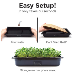 HAMAMA Home Microgreens Growing Kit, Grow Fresh Micro Greens Indoors Every Week, 30-Second Setup, Just Add Water. Includes Microgreens Tray, Microgreens Seeds. Cooking Gift. 100% Guaranteed to Grow.