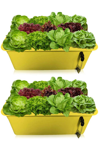 DWC Hydroponics Growing System 2Pack - Medium Size Kit w/Airstone, Bucket, Air Pump, Rockwool - Best Indoor Herb Garden for Cilantro, Mint - Complete Hydroponic Setup (15% Off 2 Pack 6 Sites)
