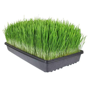 Living Whole Foods Certified Organic Wheatgrass Growing Kit | Grow & Juice Wheat Grass: Trays, Seed, Soil, Instructions, Wheatgrass Book, Trace Mineral Fertilizer & More