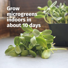 Load image into Gallery viewer, Hydroponic Sectional Microgreens Growing Kit - Grow Micro Greens & Herbs Indoor Gardening: All Supplies - Seeds, Trays, Instructions, Etc.
