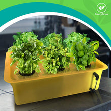 Load image into Gallery viewer, DWC Hydroponics Growing System 2Pack - Medium Size Kit w/Airstone, Bucket, Air Pump, Rockwool - Best Indoor Herb Garden for Cilantro, Mint - Complete Hydroponic Setup (15% Off 2 Pack 6 Sites)