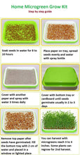 Load image into Gallery viewer, Pack of 4 Non-GMO Microgreens Seeds (Black Bean, Sunflower, Flat Bean, Wheatgrass) About 80 Grams Each. Enough for 8 Trays of Harvest
