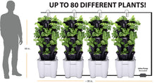Load image into Gallery viewer, 4 Tower Garden System (recirculating) (Black)