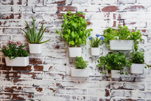 Load image into Gallery viewer, Vertibloom Living Wall Garden Starter Kit - Modular Indoor Vertical Planter System