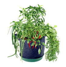 Load image into Gallery viewer, Grow Your Own Hot Sauce Container Garden, Organic Seed Pods, 1.35 Pound