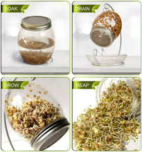 Load image into Gallery viewer, Premium Sprouting Kit Includes Unique 30 oz Wide Mouth Sprouting Jar, Stand, Tray and Sprouting Lid | Decorative Indoor Seed Sprouter and Germinator (1 Kit)
