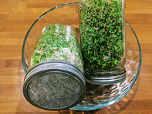 Load image into Gallery viewer, Sprouting Jar with Screen Lid-316 Stainless Steel 100% Rust Free, Wide Mouth Quart Mason Jar Kit Sprouter, Organic Healthy Fresh Broccoli, Alfalfa, Mung Bean Sprouts and More (Seeds not Included)