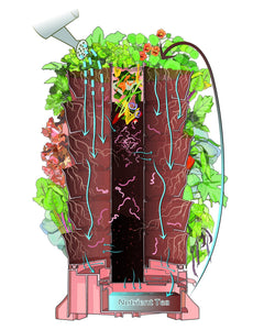 Using Compost & Worms, Your Plants Will Explode In Vibrance.