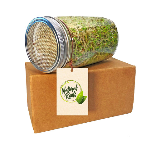 Sprouting Jar with Screen Lid-316 Stainless Steel 100% Rust Free, Wide Mouth Quart Mason Jar Kit Sprouter, Organic Healthy Fresh Broccoli, Alfalfa, Mung Bean Sprouts and More (Seeds not Included)
