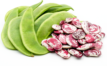 Load image into Gallery viewer, Pole Bean Heirloom LIMA CHRISTMAS 25 SEEDS Large Bean Vigorous Heat Tolerant