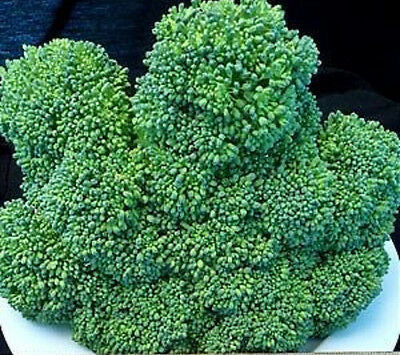 Heirloom WALTHAM 29 Broccoli❋5000 SEEDS ❋HIGH YIELDS❋LARGE CROPS of Side Shoots