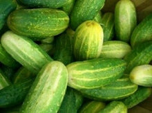 Load image into Gallery viewer, NON GMO Heirloom Cucumber BOSTON PICKLING 100 SEEDS HIGH YIELDS Salad Cukes