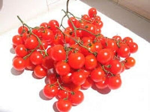 Heirloom German RIESENTRAUBE Tomato❋100 SEEDS❋HUGE Clusters Cherry Red Tomatoes