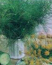 Load image into Gallery viewer, Dill Herbs Heirloom Dill Bouquet - 2000 Seeds - High Yields Culinary Medicinal
